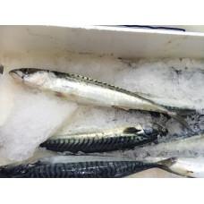 Mackerel (1 box)